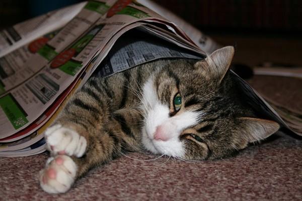 可爱猫猫图片大荟萃